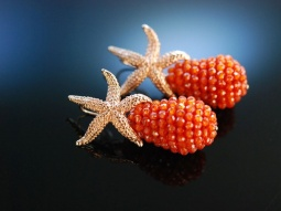 Red Sea Stars! Seestern...